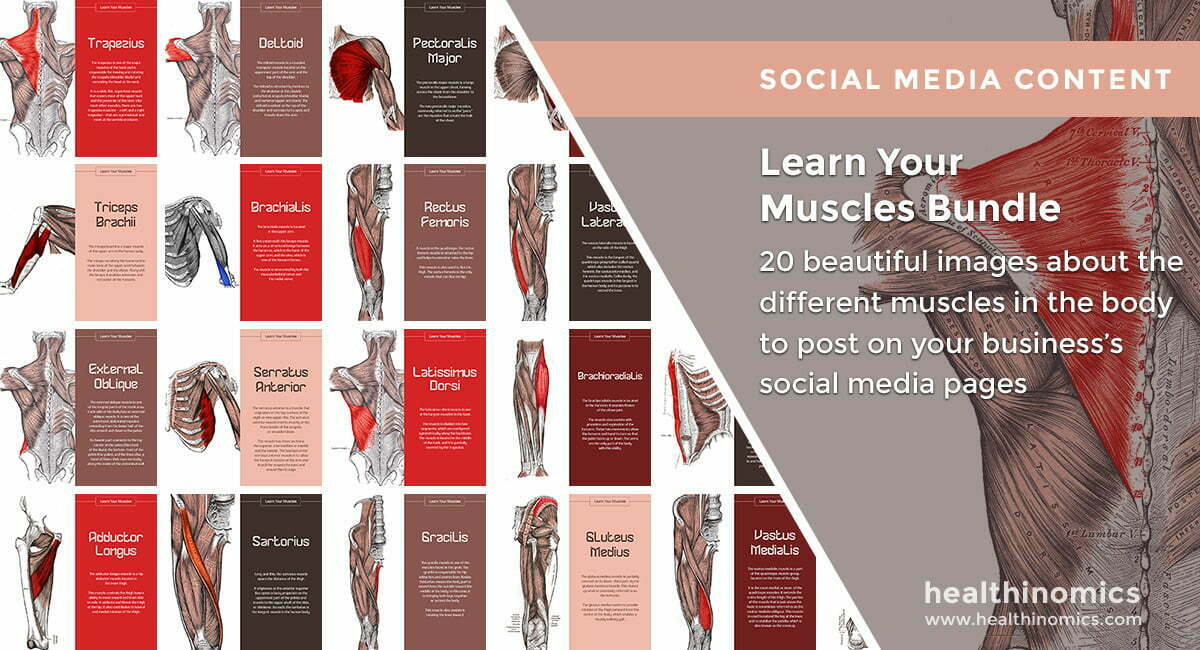 Social Media Images – Learn Your Muscles Bundle | Healthinomics.com